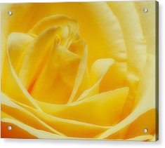 Acrylic Print featuring the photograph Yellow Rose by Bob Coates