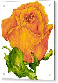 Yellow Rose Bud Acrylic Print