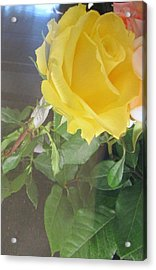 Yellow Rose- Greeting Card Acrylic Print
