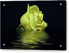 Yellow Rose II Acrylic Print