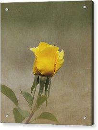 Yellow Rose Acrylic Print by Kim Hojnacki