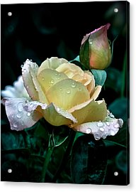 Yellow Rose Morning Dew Acrylic Print by Julie Palencia