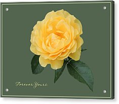 Yellow Rose Of Love Acrylic Print