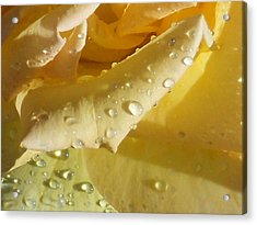 Acrylic Print featuring the photograph Yellow Rose Raindrops by Diannah Lynch