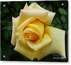 Yellow Rose Say Goodbye Acrylic Print