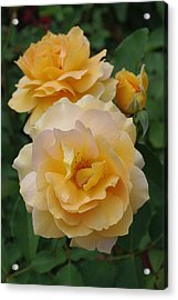 Acrylic Print featuring the photograph Yellow Roses by Marilyn Wilson