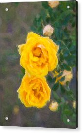 Yellow Roses On A Bush Acrylic Print by Omaste Witkowski
