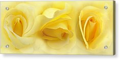 Yellow Roses Triptych Panel Acrylic Print by Jennie Marie Schell