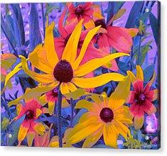 Fantasy Garden - Rudbeckia Acrylic Print