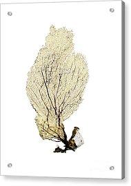 Yellow Sea Fan Acrylic Print by Jennifer Booher
