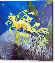 Yellow Seadragon Acrylic Print