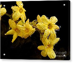 Acrylic Print featuring the photograph Yellow Spring Flowers by Elvira Ladocki