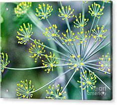 Acrylic Print featuring the photograph Yellow Stars by JRP Photography