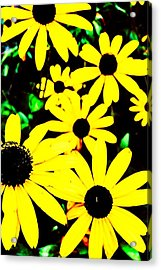Yellow Stroll Acrylic Print by Paul Tully