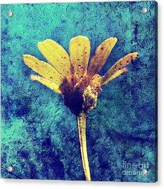 Yellow  Acrylic Print by Stelios Kleanthous