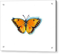 Acrylic Print featuring the painting Yellow Sulphur by Katherine Miller