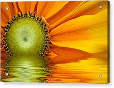 Yellow Sunflower Sunrise Acrylic Print