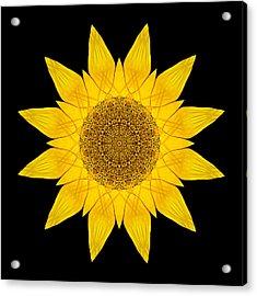 Yellow Sunflower X Flower Mandala Acrylic Print