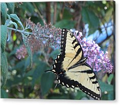 Yellow Swallowtail Butterfly Acrylic Print by Debbie Nester