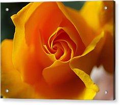 Yellow Swirl Acrylic Print by Joe Schofield