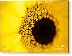Yellow Acrylic Print by T Lang
