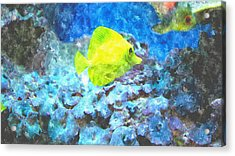 Yellow Tang Of Hawaii Acrylic Print by Rosemarie E Seppala