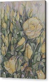 Yellow Tea Rose Closeup Acrylic Print by Lynne Bolwell