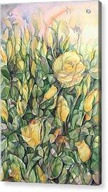 Yellow Tea Roses Acrylic Print by Lynne Bolwell