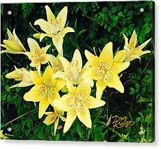 Acrylic Print featuring the photograph Yellow Tiger Lilies by Doug Kreuger