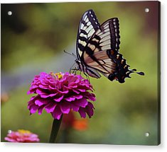Acrylic Print featuring the photograph Yellow Tiger Swallowtail Butterfly by Kay Novy