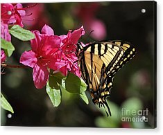 Acrylic Print featuring the photograph Yellow Tiger Swallowtail Butterfly by Nava Thompson