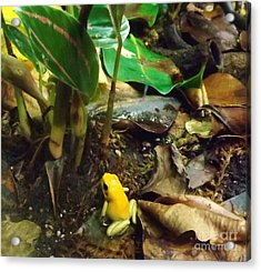 Yellow Tree Frog Acrylic Print by Brigitte Emme