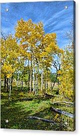 Yellow Tree Acrylic Print by Keith Ducker