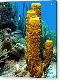 Yellow Tube Sponge Acrylic Print