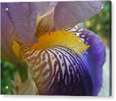 Acrylic Print featuring the photograph Yellow Tuft by Cheryl Hoyle
