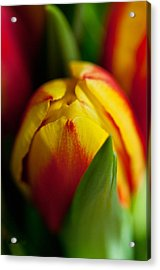 Acrylic Print featuring the photograph Yellow Tulip by Sabine Edrissi