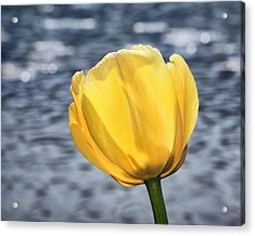 Acrylic Print featuring the photograph Yellow Tulip Shimmering Water by Tracie Kaska