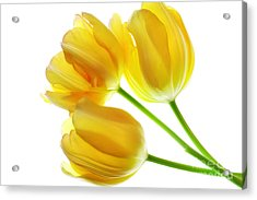 Yellow Tulips Acrylic Print by Charline Xia