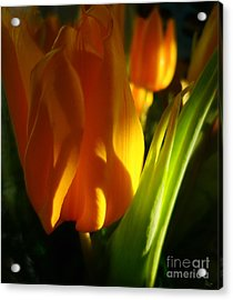 Yellow Tulips Acrylic Print by Jeff Breiman