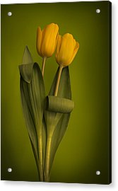 Yellow Tulips On A Green Background Acrylic Print by Eva Kondzialkiewicz