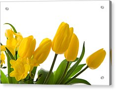 Yellow Tulips On White Acrylic Print by Anna Kaminska