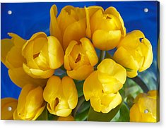 Acrylic Print featuring the photograph Yellow Tulips by Patricia Schaefer
