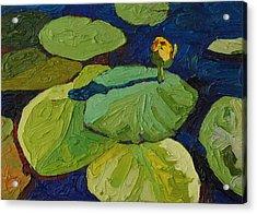 Yellow Waterlily Acrylic Print by Phil Chadwick