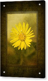 Yellow Wildflower Acrylic Print