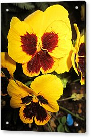 Yellow Wings Acrylic Print by Mike Podhorzer