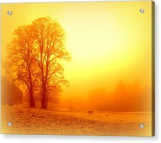 Yellow Winter Sunrise Acrylic Print by The Creative Minds Art and Photography