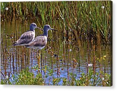 Acrylic Print featuring the photograph Yellowlegs Of Texas by Gary Holmes