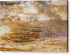 Yellowstone Gold Acrylic Print