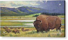 Yellowstone Bison Acrylic Print