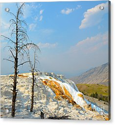 Yellowstone Canary Spring Acrylic Print